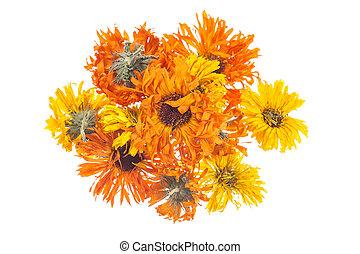 fleurs, isolé, arrière-plan., séché, calendula, blanc, souci, ou