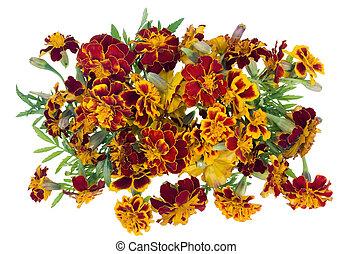 fleurs, isolé, médaillon, safran