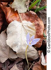 fleurs, jardin, naturel, lis, monture, liliaceae