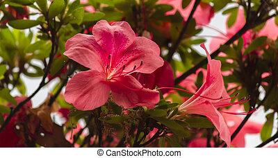 fleurs, jardin