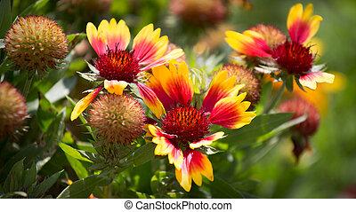 fleurs, jardin, soleil