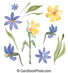 fleurs jaunes, bleu