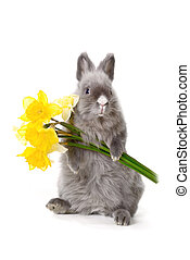 fleurs, lapin, jaune