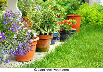 fleurs, lobelia, jardin, usines