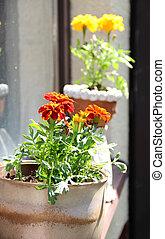 fleurs, moderne, terrasse, lot