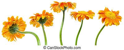 fleurs oranges