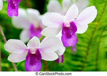 fleurs, orchidée