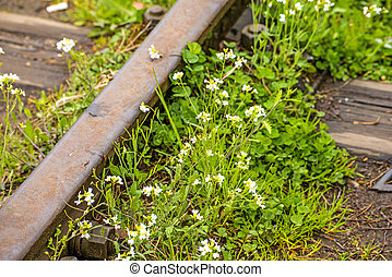fleurs, ordre, rails, dehors