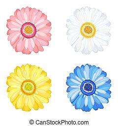 fleurs, pâquerette, gerbera