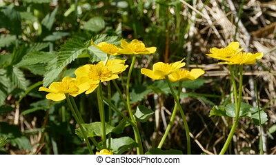 fleurs, pacoteure, jaune