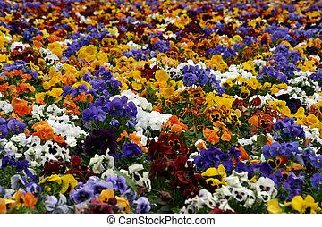 fleurs, parc