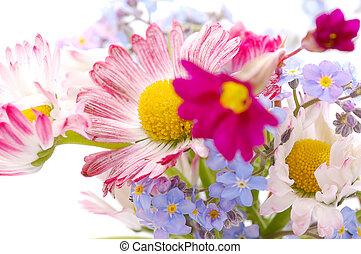 fleurs, petit, bouquet, printemps