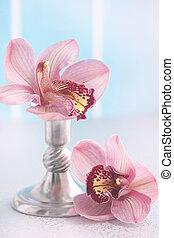 fleurs, phalaenopsis