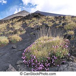 fleurs, pied, volcan