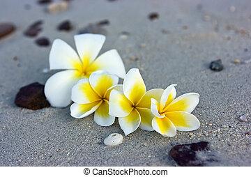 fleurs, plage