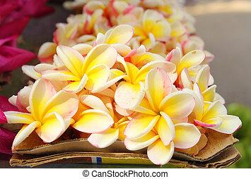 fleurs, plumeria