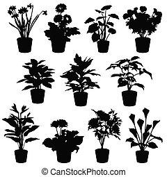fleurs, pots