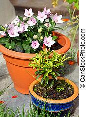 fleurs, pots, jardin
