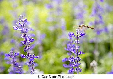 fleurs pourpres, closeup, jardin