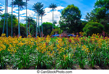 fleurs pourpres, jardin, jaune