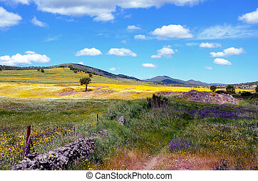 fleurs pourpres, paysage, jaune