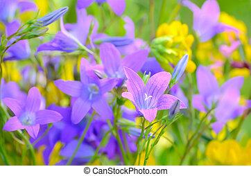 fleurs, pré, campanule