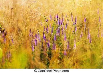 fleurs, pré