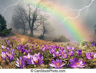 fleurs, premier, crocus, montagnes