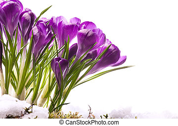 fleurs, printemps, art, beau