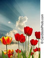fleurs, printemps, beau
