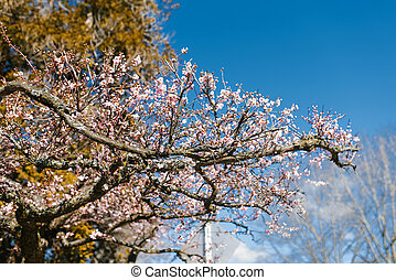 fleurs, printemps, contre, ciel clair, fleurir, rose, bleu, arbre