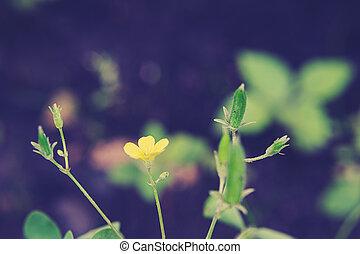 fleurs, printemps, fleur