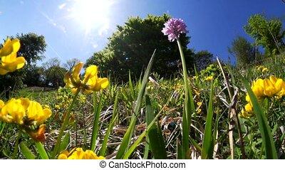 fleurs, -, printemps, orchidée