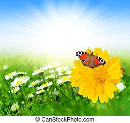 fleurs, printemps, papillon