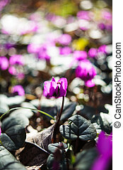 fleurs, printemps, premier