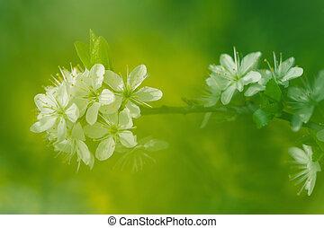 fleurs, résumé, arbre, printemps, fond, pomme