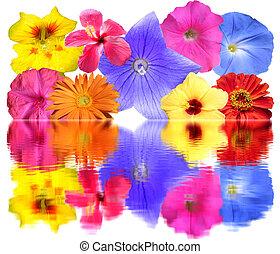 fleurs, refléter, tas