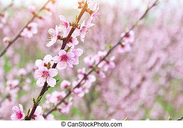 bleu branches arbre ciel contre fleurs violettes photographie de stock rechercher des. Black Bedroom Furniture Sets. Home Design Ideas