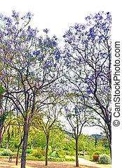 fleurs ressort, arbres