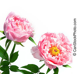 fleurs ressort, beau