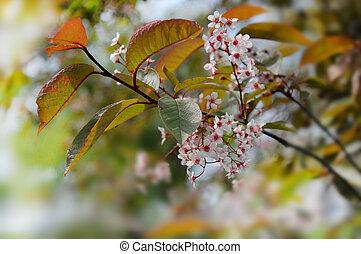 fleurs ressort, branche