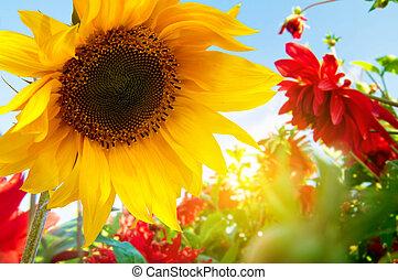 fleurs ressort, dans jardin