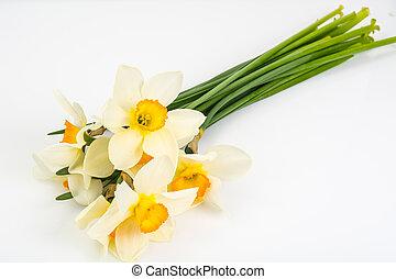 fleurs ressort, de, jonquilles, blanc, fond