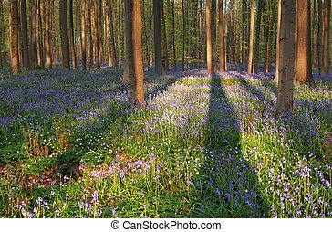 fleurs ressort, ensoleillé, forêt