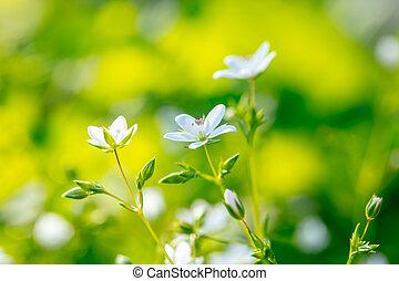 fleurs ressort, fleurir