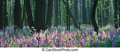 fleurs ressort, forêt
