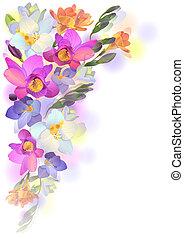 fleurs ressort, freesia, fond, doux