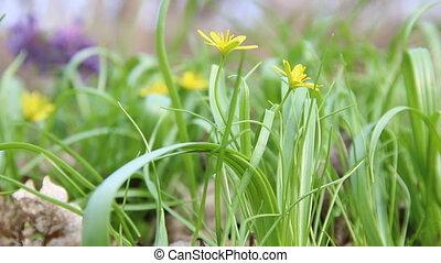 fleurs ressort, jaune