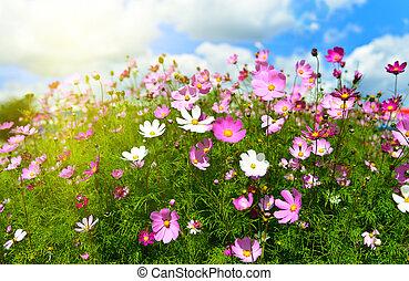 fleurs ressort, pré