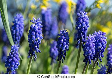 fleurs ressort, premier, avril